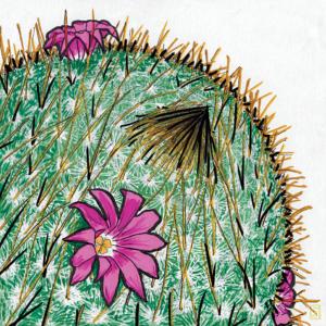 Cactus Blossom illustration