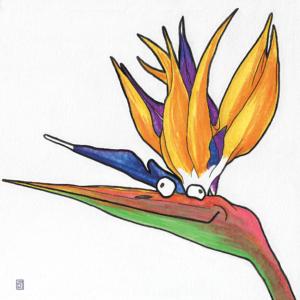 Bird of Paradise illustration