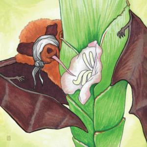 Bromeliad illustration