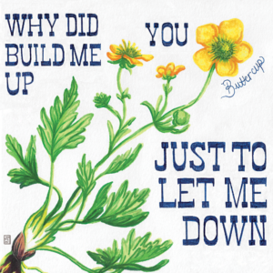 Buttercup flowere illustration