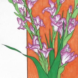 Gladiolus flower illustration